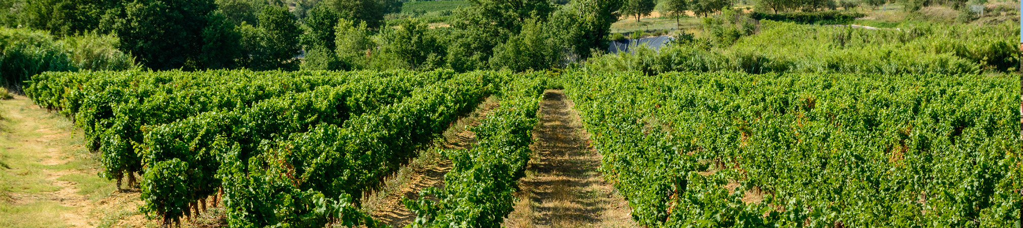 expert-comptable-Languedoc-Roussillon-Midi-Pyrenees